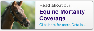 Read about our Equine Mortality Coverage